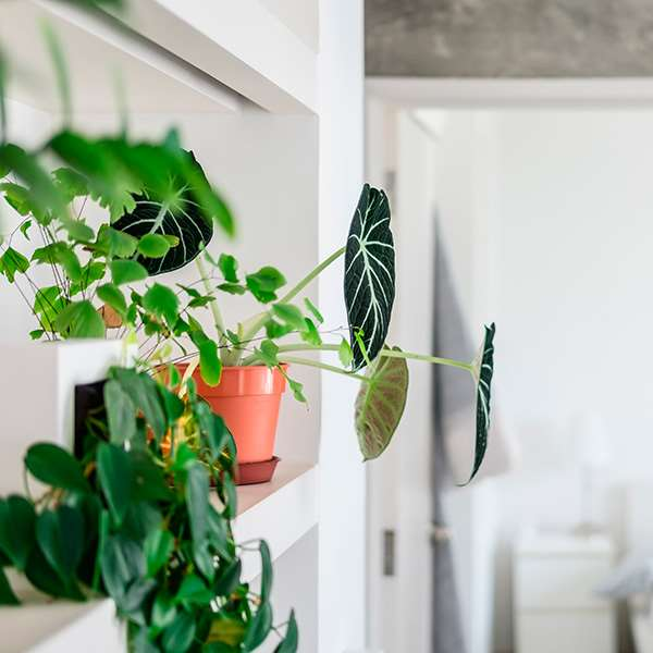 Green botanical plants on bathroom shelf