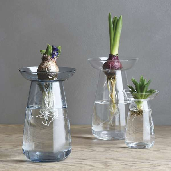 Glass vases with plant bulbs by pelican story