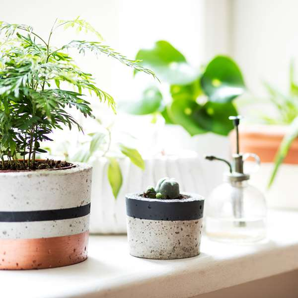 Plant pots and green plants on a sunny bathroom shelf